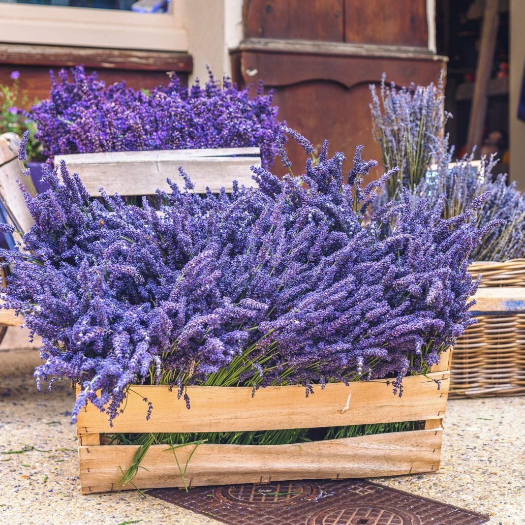 Lavender for sale close-up.Assembled lavender on sale in wooden boxes and a basket.A lot of lavender on sale.